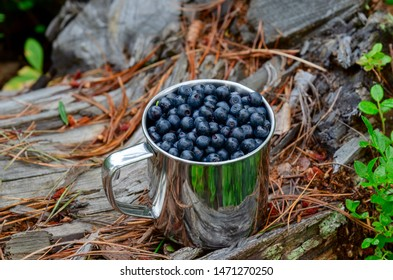 bilberry in cup in forest. Fresh bilberry in cup on the ground in forest. A cup of bilberry