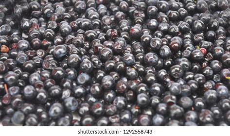 Bilberry textured  background Vaccinium myrtillus is a species of shrub with edible fruit of blue color, commonly called bilberry, whortleberry or European blueberry