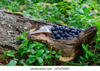 bilberry in wooden cup in forest. Fresh bilberry in cup on the ground in forest. A cup of bilberry