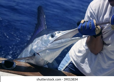 Billfish white Marlin catch and release on boat board