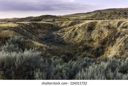 Billings, Montana, USA - The rugged landscape of bush land and undulations of the prairie near Billings at dawn, Montana, USA.