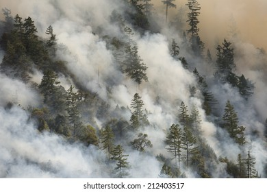 Billowing smoke from a forest fire (Lodge Fire, California, August 2014).