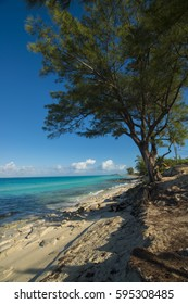 Bimini beach with trees ocean and cruise ship in distance