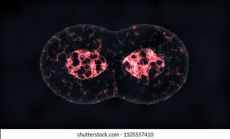Binary fission cells division
