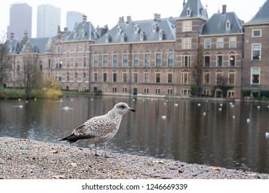 Binnenhof in The Hague Netherland