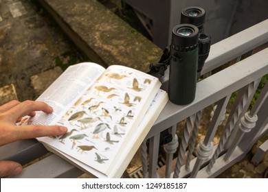 Binoculars and Bird Guide Birdwatching