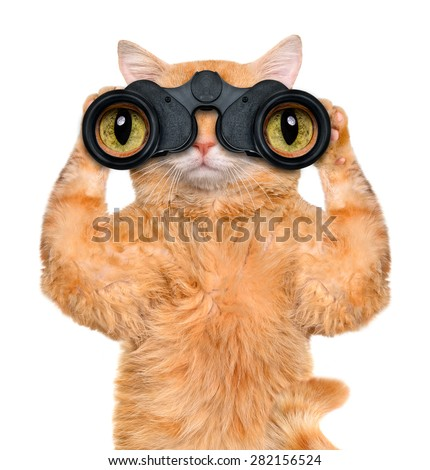 237037bb Binoculars Cat Searching Looking Observing Care Stock Photo (Edit ...
