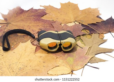 Binoculars on autumn leaves. Isolated on white background