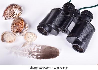 Binoculars, seashell, feathers
