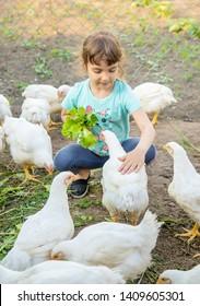 Bio chickens on a home farm a children. nature.