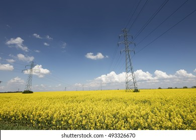 Bio fuel theme. Ecology. Rape seed oil. Science and technology. Blue sky and clouds.
