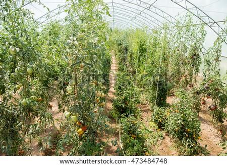 Bio Garden Eco Vegetables Tomatoes Peppers Stock Photo Edit Now