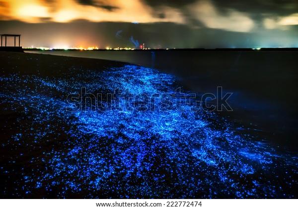 Bio luminescence. Illumination of plankton at Maldives. Many bright particles.