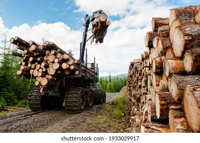 Bio mass timber harvesting in Norway