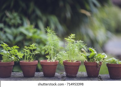 bio self-sufficiency garden herbs