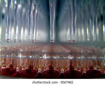 bioassay using liquid handler