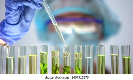 Biochemist pouring oily liquid in tube with plant, preservative agent research