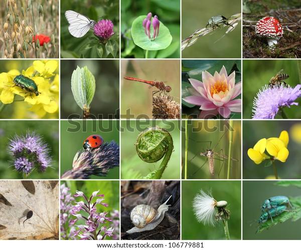 Biodiversitet collage med alle ikke-landbrugsmæssige værdi planter eller dyr, men vigtigt for øko-balance (alle billeder tilhører mig)