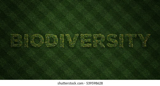BIODIVERSITY - fresh Grass letters with flowers and dandelions - 3D rendered royalty free stock image. Can be used for online banner ads and direct mailers.