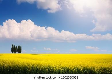 bioenergy; Rapsfeld spring Panorama