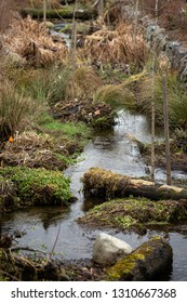 Bioengineered stormwater drain culvert, with water flowing through tree stumps and grasses for filtration, in a natural background
