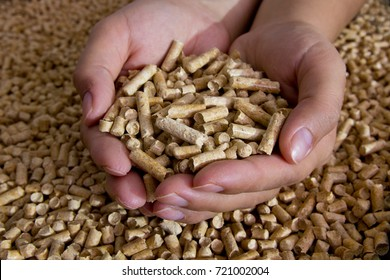 Biofuels. Alternative biofuel from sawdust , wood pellets in hand. The cat litter.
