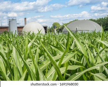 biogas production, biogas plant, bio power in the maize field