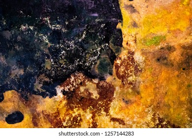 Biological abstract background made by fungus and decomposition. brown, green and dark color from the earth as multicolor texture similar to a geographic map