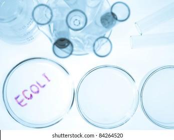 Biological culture laboratory glassware with growing ecoli bacteria, Escherichia coli bacteria
