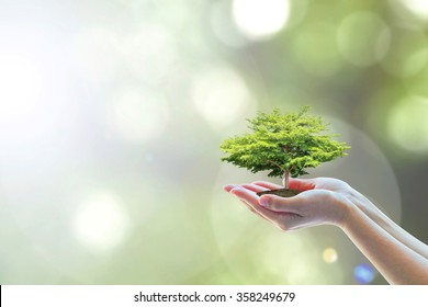 Biological tree planting on volunteer's hand for saving tree of life, world environment protection, harmony living with ecosystem concept