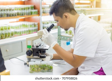 Biologist in laboratory.Male students university holds plant tissue culture bottles.