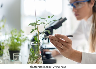 Biologist taking experiment with plants