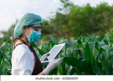 Biologist in white coat holding tablet in front of examining plants for disease with apron and gloves. Plant protection concept