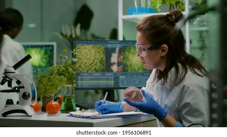 Biologist woman writing medical expertise while holding petri dish with vegan beef meat in hands working in microbiology laboratory. Chemist woman researching food modified genetically