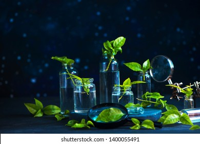 Biology lab header. Green plants in glass bottles with a magnifying glass on a dark background with copy space.