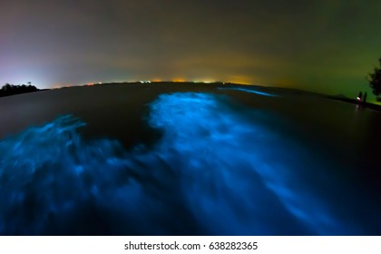 Bioluminescence in night sea water. Blue fluorescent wave of bioluminescent plankton, long exposure shot, Thailand.