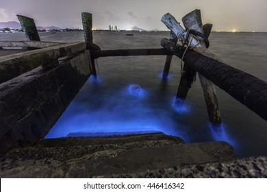 Bioluminescent, Glowing Marine Plankton in Bang Saen, Thailand