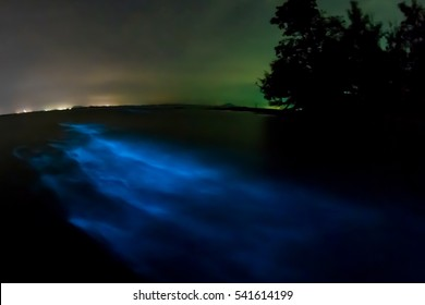 Bioluminescent plankton. Illumination of glowing wave taken with long exposure.