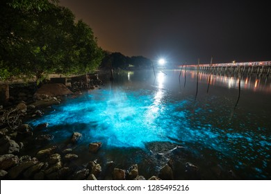Bioluminescent Plankton Light Up the Sea, The Mesmerising Phenomenon making the Sea Glows Bright Blue at Sapan Daeng (Red Bridge) at Mutchanu Shrine, Samut Sakhon Province, Thailand.