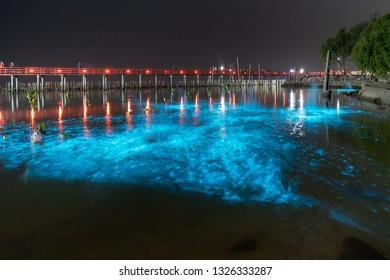 Bioluminescent Plankton Light Up the Sea, The Mesmerising Phenomenon making the Sea Glows Bright Blue at Sapan Daeng (Red Bridge) at Mutchanu Shrine, Samut Sakhon Province, Thailand.