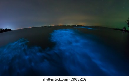 Bioluminescent wave, glowing marine plankton, long exposure.