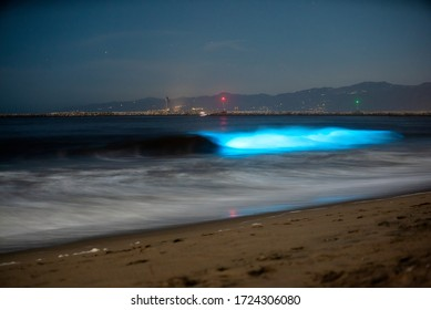 Bioluminescent Waves Crash on the Beach in Los Angeles