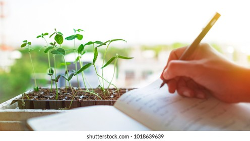 Biotechnology laboratory research examining plant. Agriculture and scientist concept.