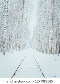 Birch alley covered in snow. First snow in countryside. Fields covered in fog, icy roads and snow covered trees.