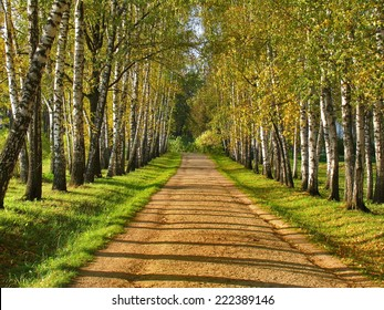 Birch alley - Preshpect in autumn, Yasnaya Polyana, Tula, Russia. Preshpect - birch alley from entrance to manor to house of writer Leo Tolstoy, appeared around 1800.