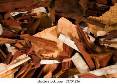 Birch and arbutus tree bark