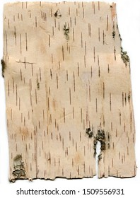 birch bark backdrop frame texture pattern close-up on white background