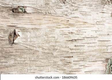 birch bark natural texture background