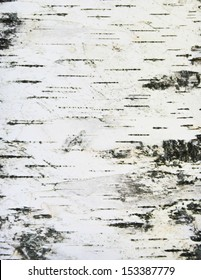 birch bark texture background paper