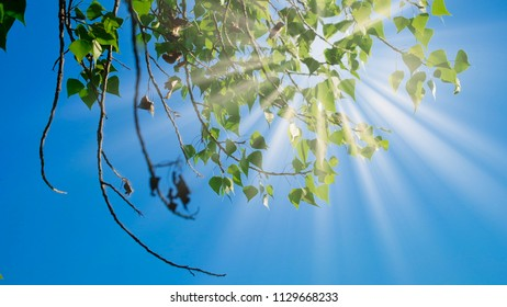 Birch branches with green leaves moving in the wind in front of the sky, copyspace